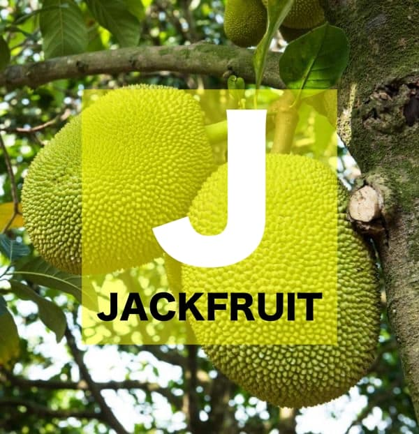 List of Fruits Names starts with J
