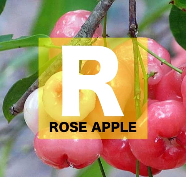 List of Fruits Names starts with R