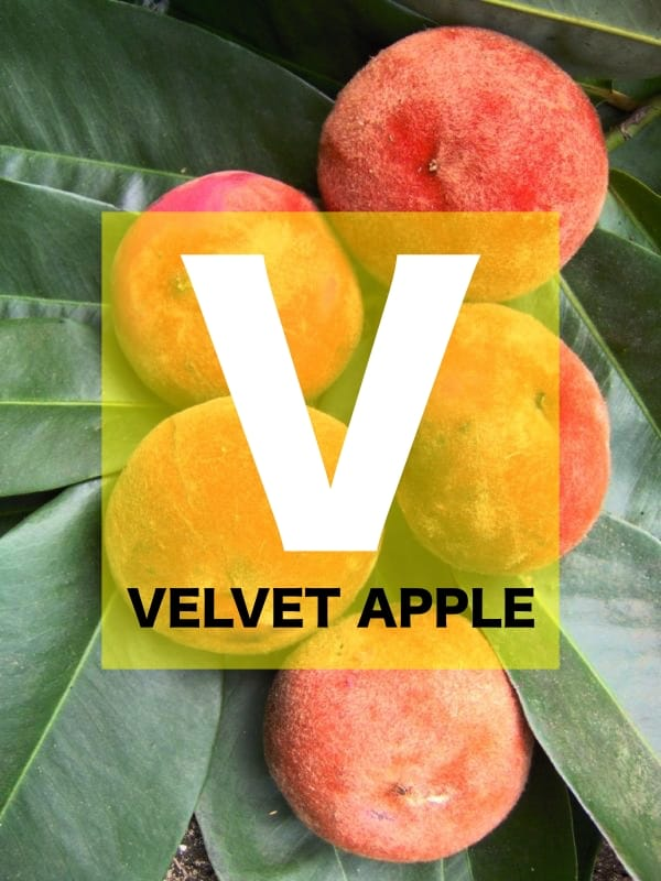 List of Fruits Names starts with V