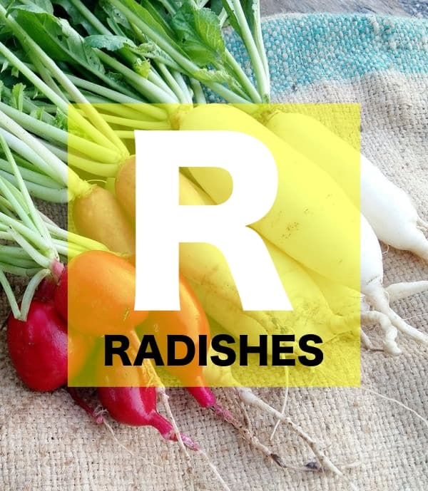 List of Vegetables Names starts with R